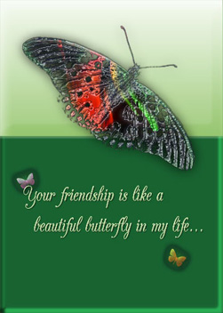 Beautiful Butterfly friendship Card Cover